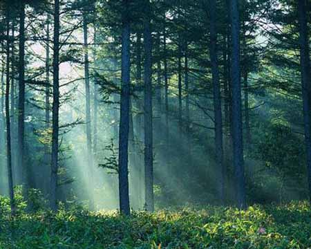 Pri založbi Modrijan izšla knjiga Drevesa in grmi Jadrana dr. Roberta Brusa