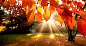 Opišite svoje doživetje jeseni