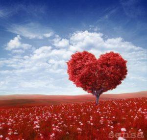 Ciril Zlobec: Ljubim te